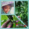 🍁収穫祭🍁